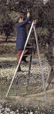 Стремянка алюминиевая садовая, 10 ступеней в работе